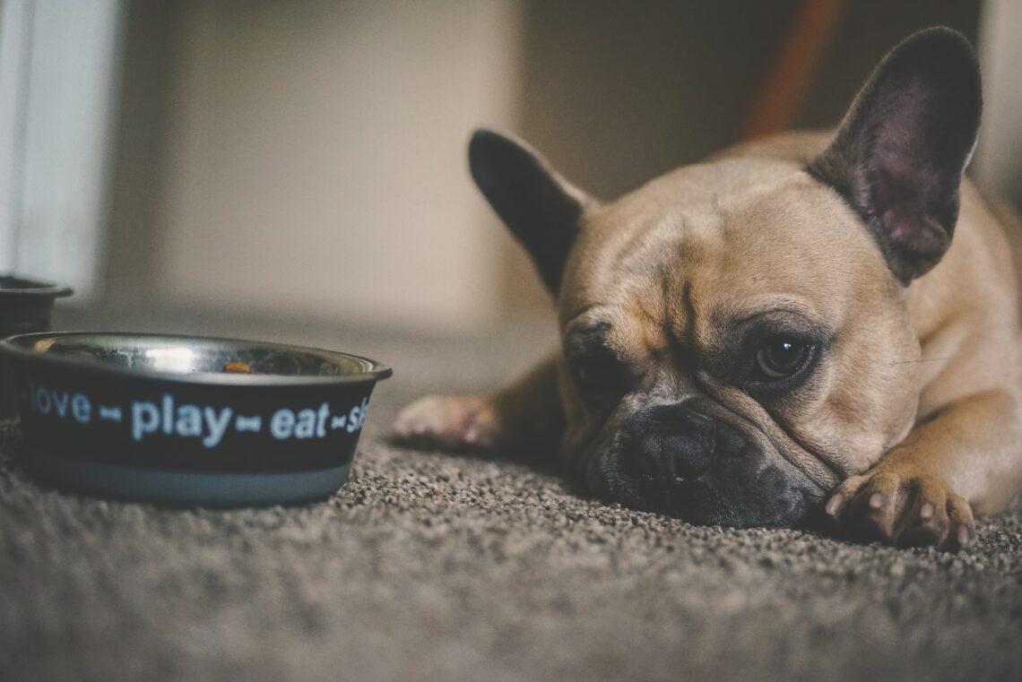 hund med fodder